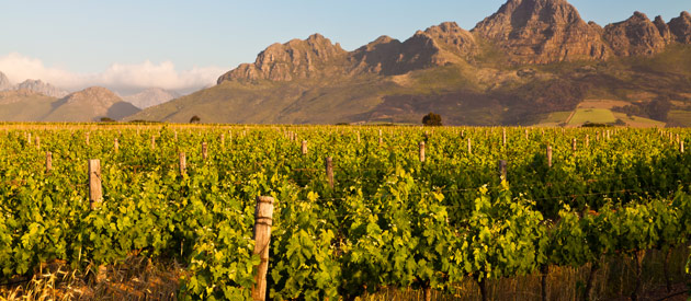 Stellenbosch Wine Routes - new blog: Stellenblog